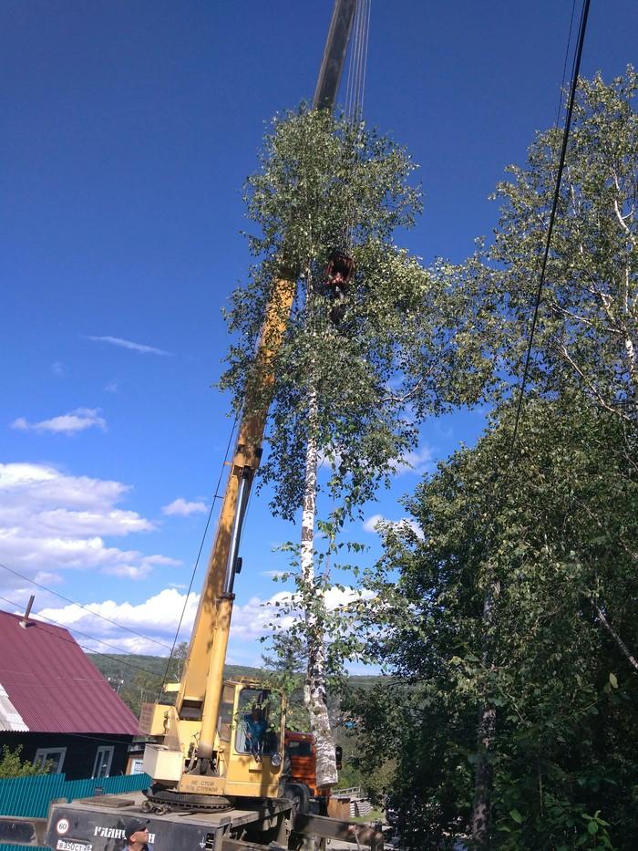 Расчистка линий Работа, Дерево, Длиннопост