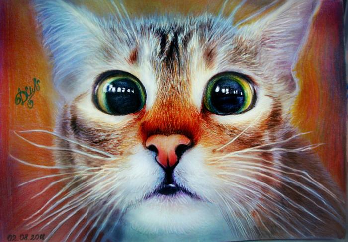 Глазастый котя Милота, Кот, Рисунок, Глаза, Арт, Цветные карандаши, Пушистый, Животные