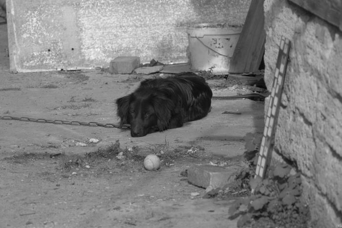 Грустный собак Животные, Собака, Фотография, Черно-Белое, Печаль