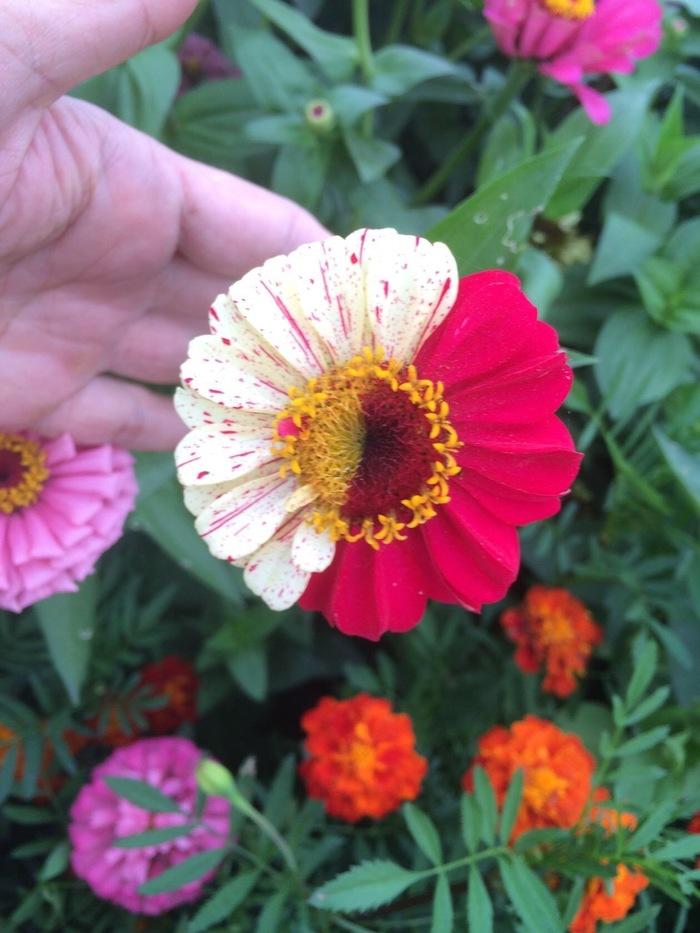 Прикольненько необычненько природненько Цветы, Огород, Длиннопост