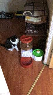 Да как же ты открываешься то?! Кот, Котомафия, Кормушка, Вертикальное видео, Видео, Гифка