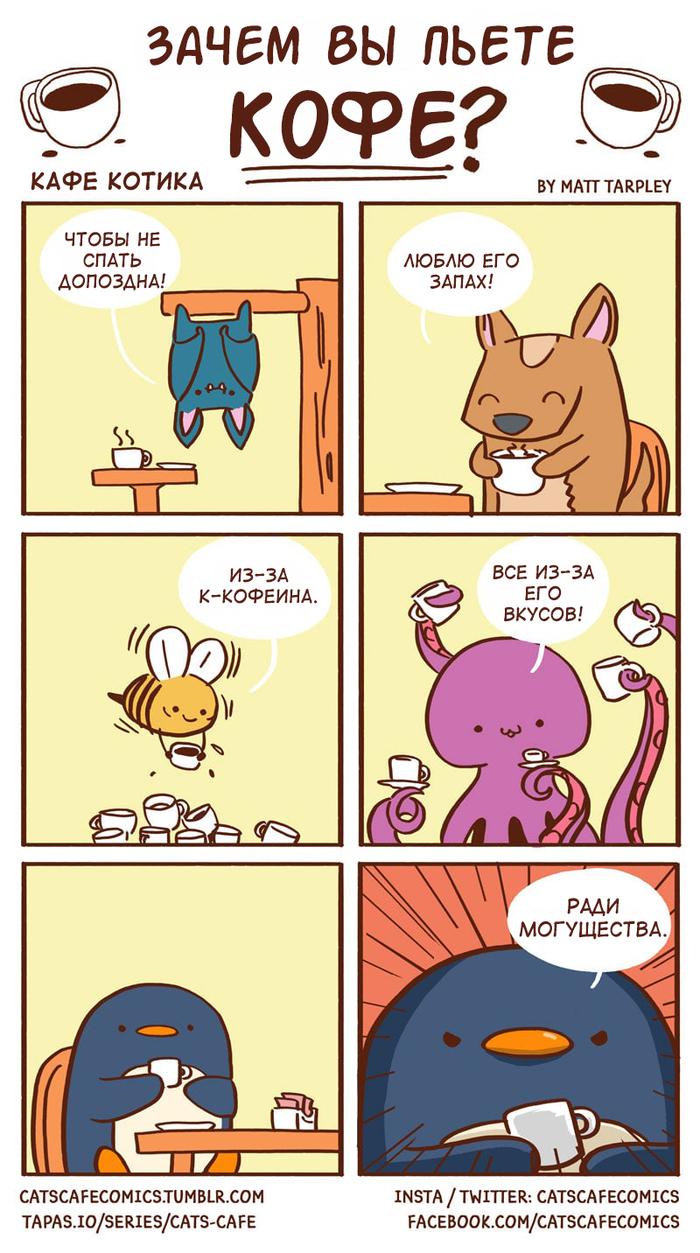 Cafe Cats #7 Cats cafe, Комиксы, Matt tarpley, Кофе, Кот, Длиннопост