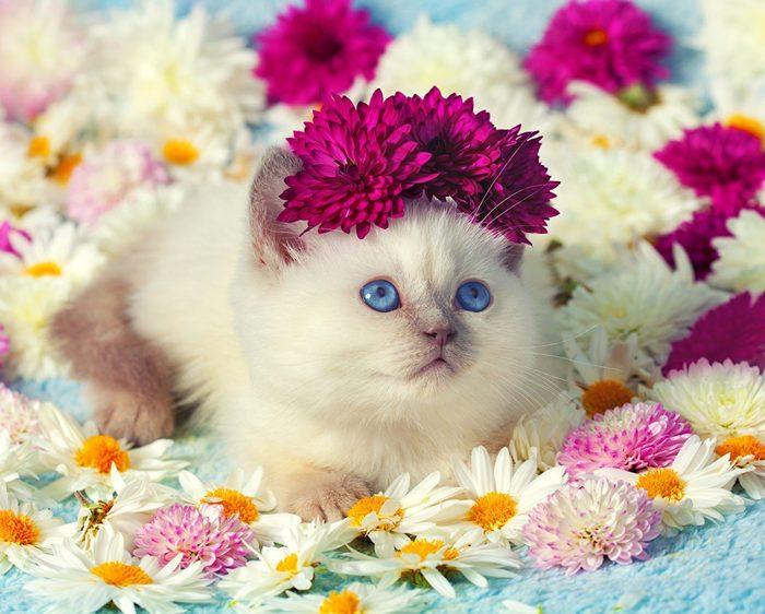 Милый цветочек