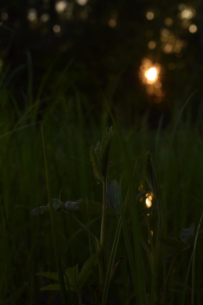 Болото и Закат Начинающий фотограф, Лес, Болото, Закат, Травка, Длиннопост