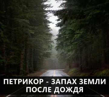 Почему людям нравится запах дождя? Дождь, Интересное, Вода, Романтика, Познавательно, Факты, Ответ