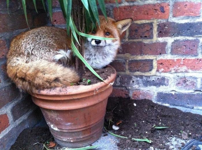 У нас новое растение!