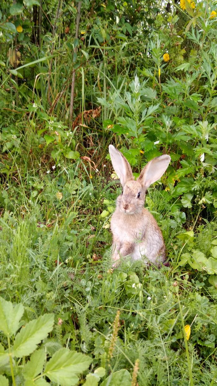 Помогите определить, кто это. Помощь, Заяц или кролик, Длиннопост