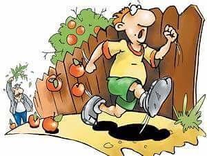 Ну, кто не воровал яблоки в детстве?! Детство, Дерево, Морда, Сапоги, Длиннопост