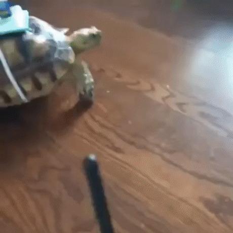 Радиуправляемая черепаха
