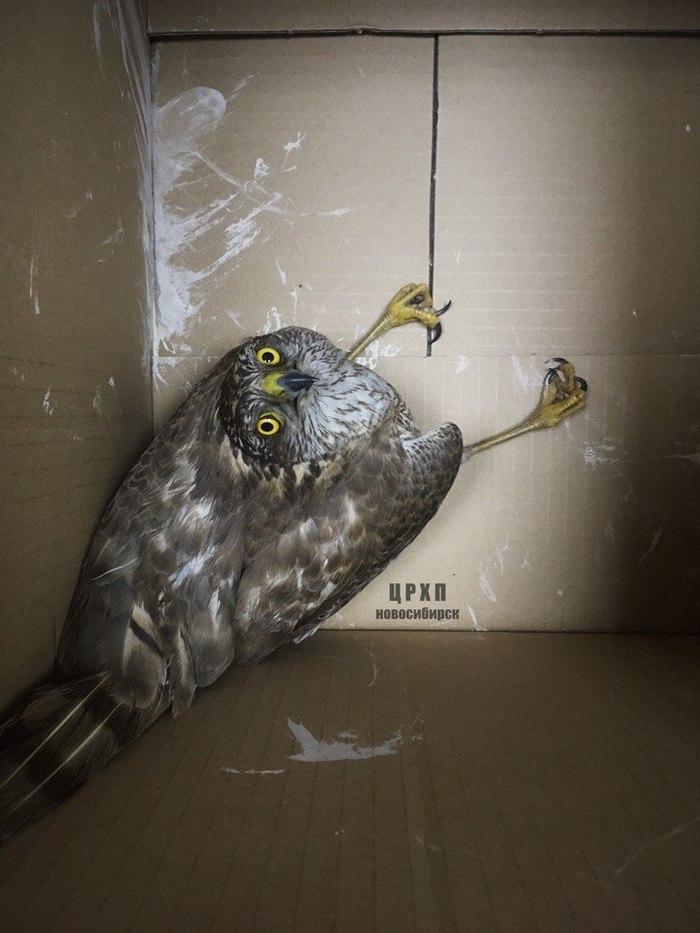 Чем это кормить? Хищные птицы, Птицы, Питание, Чем кормить, Что за птица?, Длиннопост
