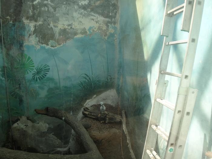 Во что превратился Московский зоопарк Московский зоопарк, Зоопарк, Какаду, Попугай, Самоощип, Москва, Негатив, Зоозащитники, Длиннопост