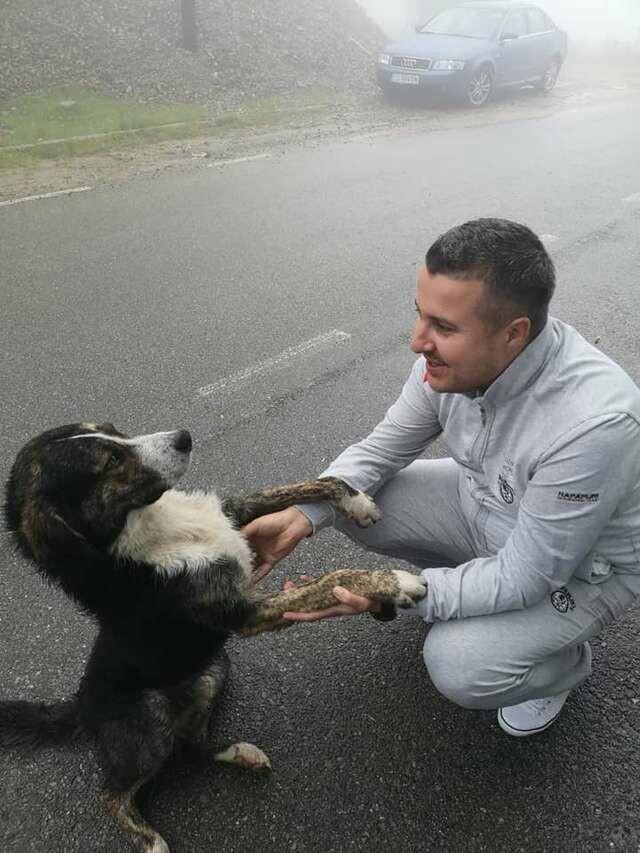 В РУМЫНИИ БРОДЯЧАЯ СОБАКА ВСЮ НОЧЬ СОГРЕВАЛА РАНЕНОГО ВЕЛОСИПЕДИСТА. Фотография, Доброта, Человек, Понимание, Собака, Собаки и люди, Румыния, Животные, Длиннопост