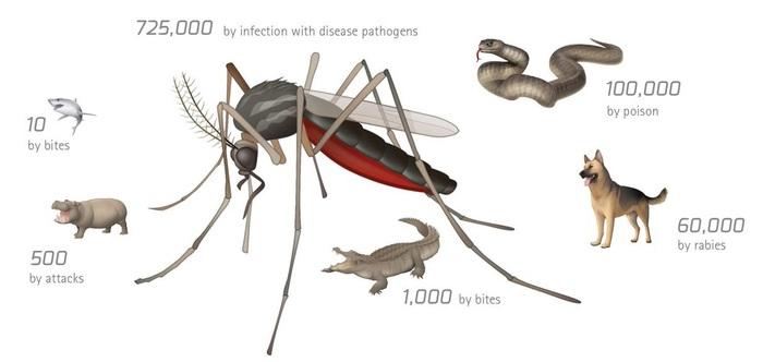 Краткий обзор средств борьбы с комарами Комары, Репелленты, Инсектициды, Фумигатор, Длиннопост