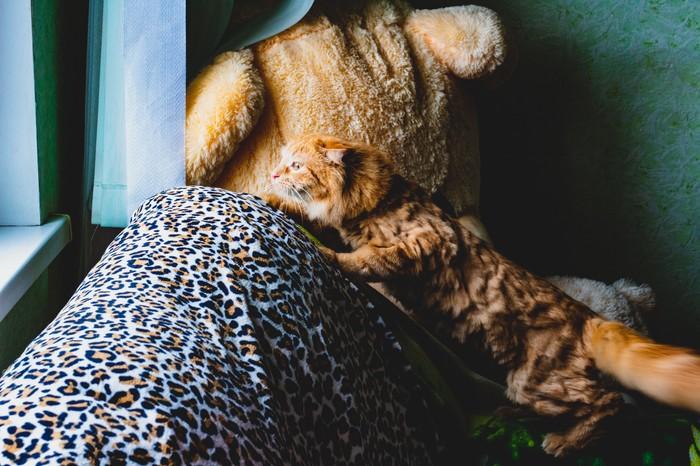 Кот и голубь Начинающий фотограф, Кот, Голубь, Охота, Canon, Длиннопост