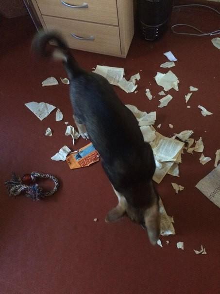 Иронично Собака, Книги, Разрушение
