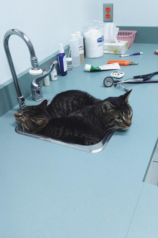 Коты прячутся в кабинете ветеринара