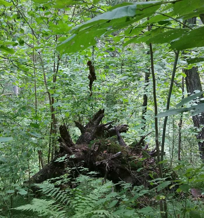 Неожиданно в лесу Лес, Листья, Длиннопост