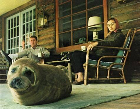 """""""У соседей моих дедушки с бабушкой был домашний тюлень"""" Reddit, Картинки, Тюлень"""