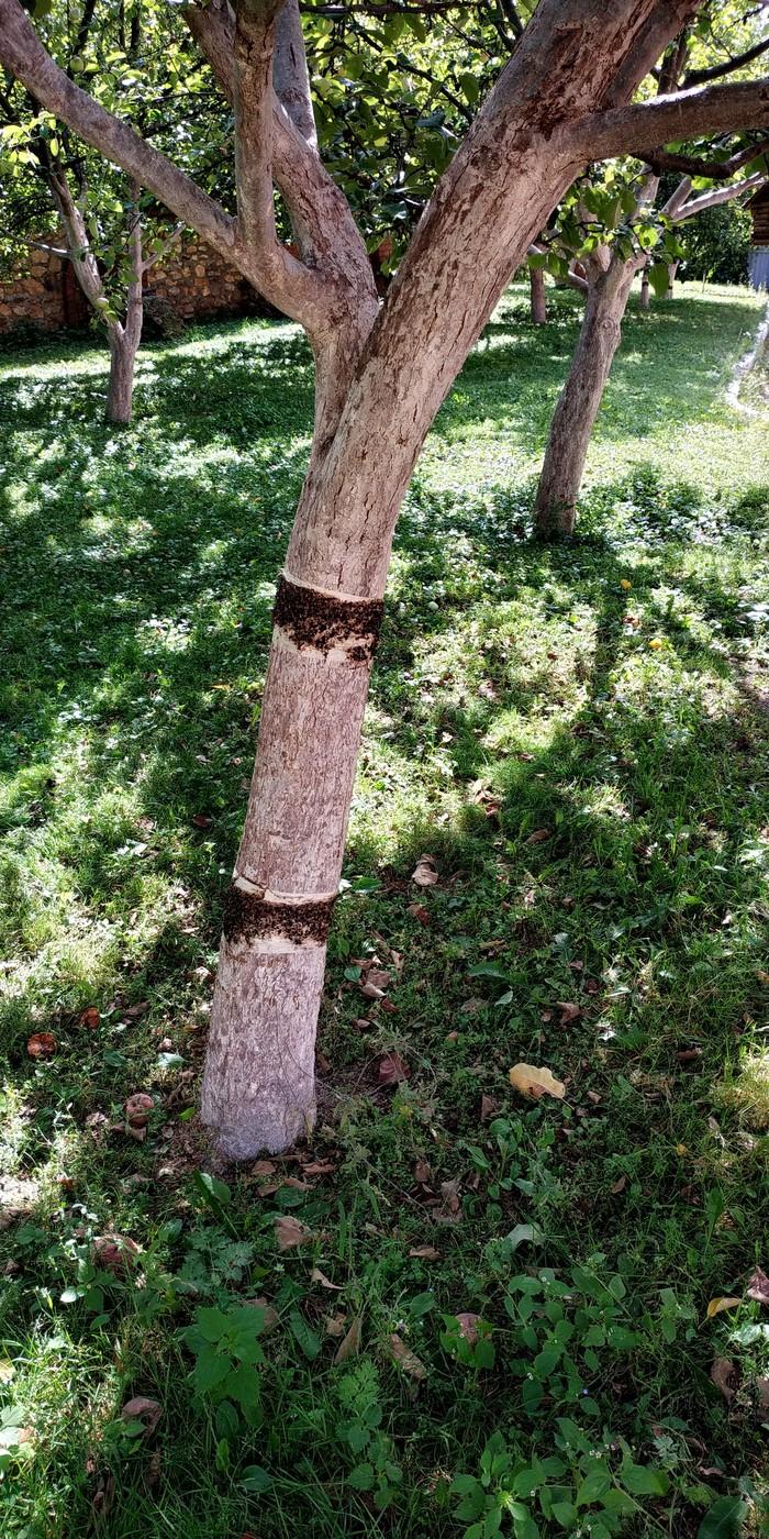 Ловушка для мух? Дерево, Ловушка для мух, Чтоэтовообщетакое, Длиннопост