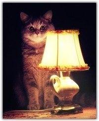 Как нужно(нет) водить девушек домой История, Реальная история из жизни, Знакомства, Кот с лампой, Длиннопост