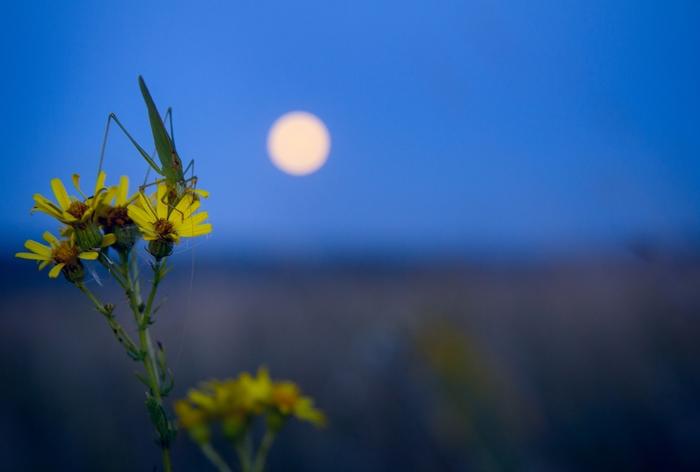 Спой мне вечернюю песнь. Фотография, Кузнечик, Природа, Лето, Фотограф