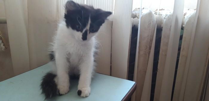 Котята в добрые руки МИНСК Без рейтинга, Кот, Отдам, Длиннопост