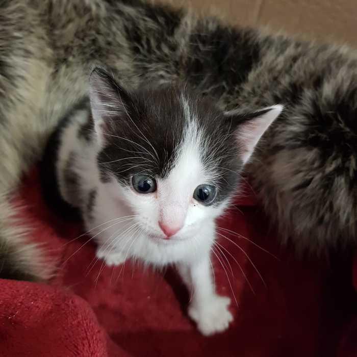 Котёнок ищет хозяев. Новосибирск Кот, Ищу хозяина, В добрые руки, Спасение животных, Помощь, Новосибирск, Без рейтинга
