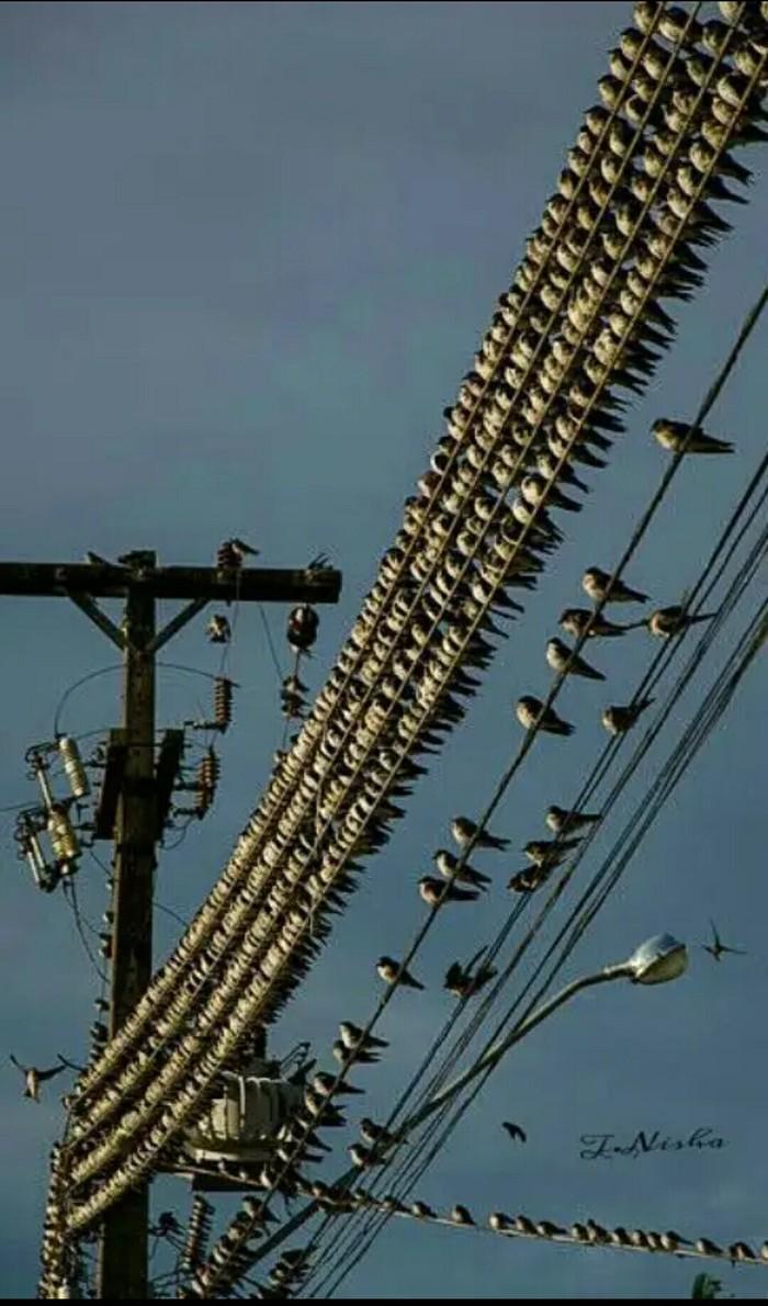 Слет энергетиков