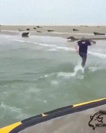 Спасение тюленя