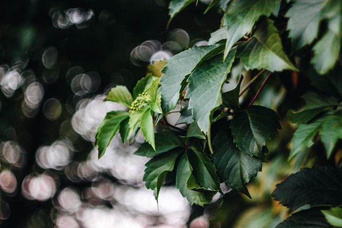 Чудесного Боке пост Фотография, Природа, Вечер, Гелиос