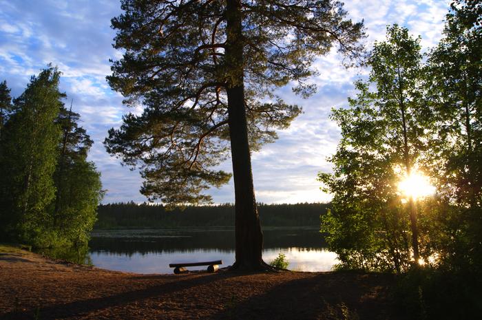 Летний вечер в Комарово. Фотография, Лето, Комарово, Озеро, Отражение, Спокойствие, Pentax, Длиннопост, Санкт-Петербург