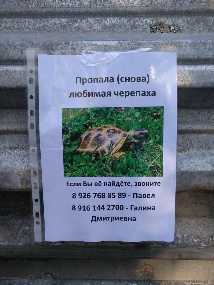 Черепаха-рецидивист