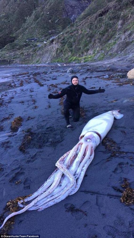 Уникальная находка: братья-дайверы нашли гигантского кальмара и не знают, что с ним делать. Кальмар, Новая зеландия, Дайвер, Под пиво пойдет, Длиннопост