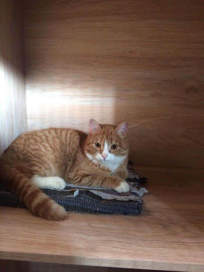 Новосибирск! Помогите пристроить кота! Без рейтинга, Новосибирск, Помощь, Кот, Длиннопост