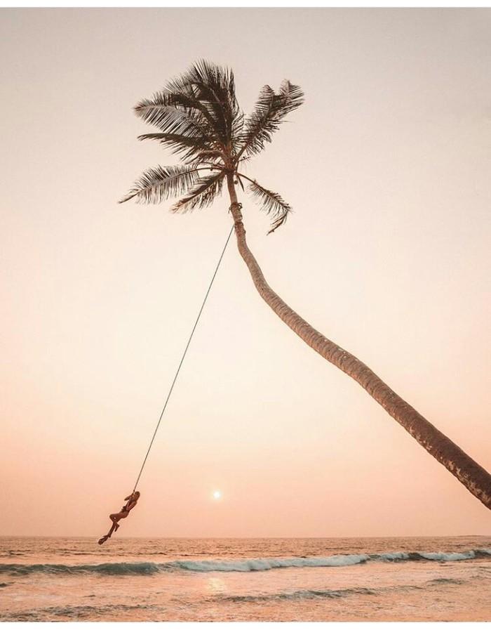 Красивый кадр Шри-Ланка, Отдых, Природа, Красота природы, Пальмы, Курорт, Фотография, Интересное