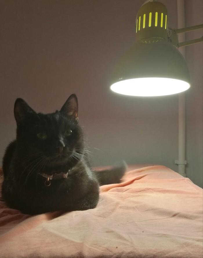 Настало время. Кот с лампой, Кот