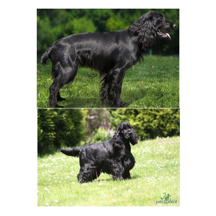 Купированные vs. некупированные Собака, Купирование, Сравнение, Длиннопост