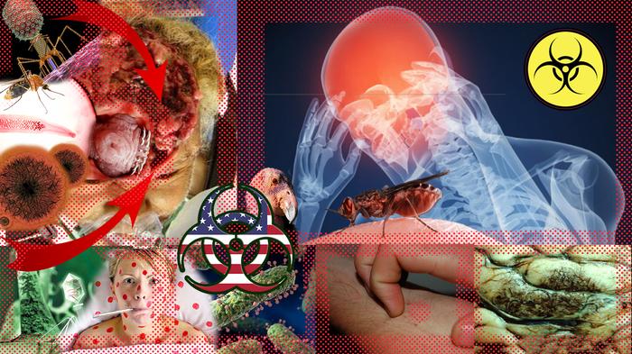 Картинки по запросу африканская чума свиней, сибирская язва, дифтерия, корь
