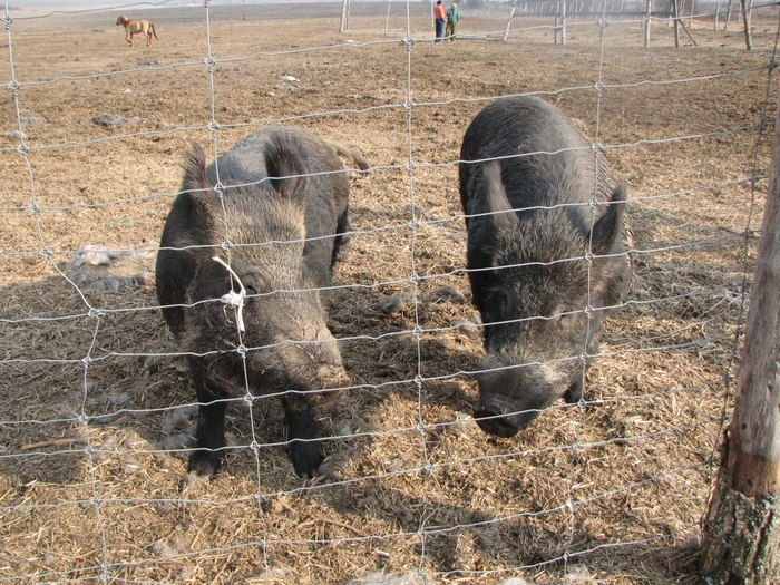 Плейстоценовый парк и его свинокабаны Плейстоцен, Плейстоценовый парк, Длиннопост