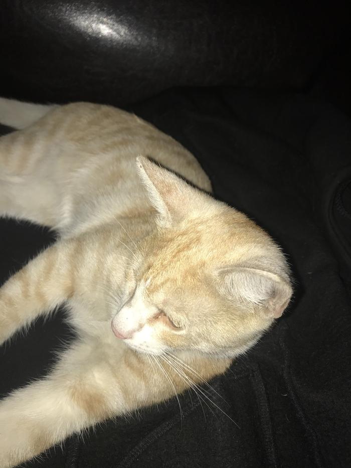 Найден котёнок! Спб, Метро Автово![Хозяева нашлись!] Без рейтинга, Кот, Найден кот, Потеряшка, Автово, Длиннопост