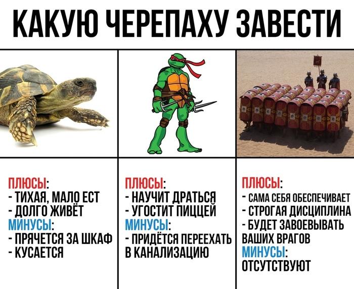Какую черепаху завести
