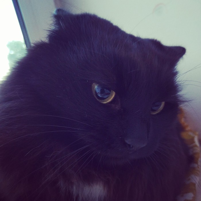 Это был не я Кот, Вина, Шерстяной, Домашние животные