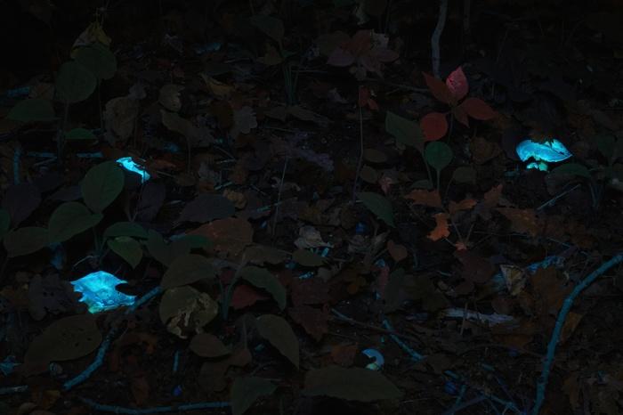 Ночной лес в ультрафиолете Ультрафиолет, Лес, Фотография, Паук, Грибы, Длиннопост