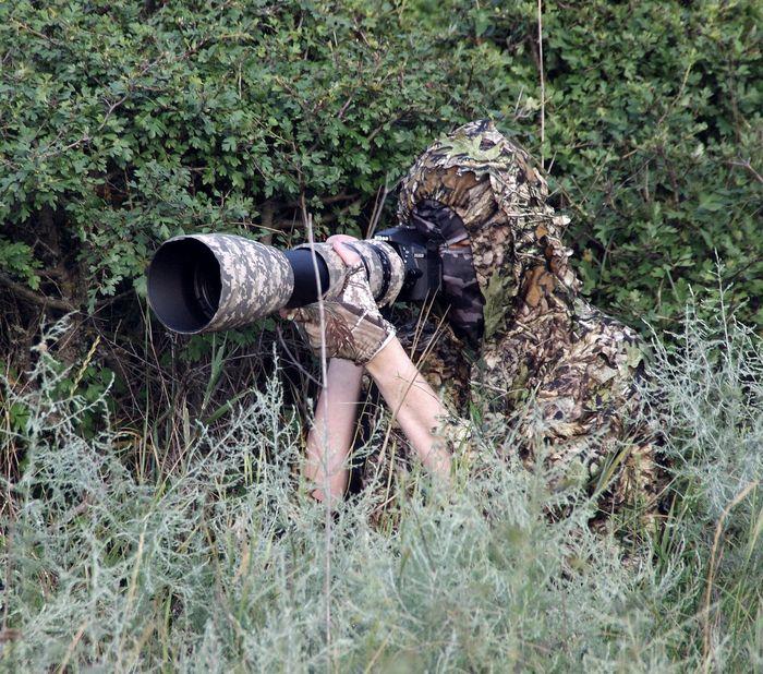 Что такое фотоохота? Фотография, Дикая природа, Фотоохота, Животные, Птицы, Лес, Объектив, Длиннопост
