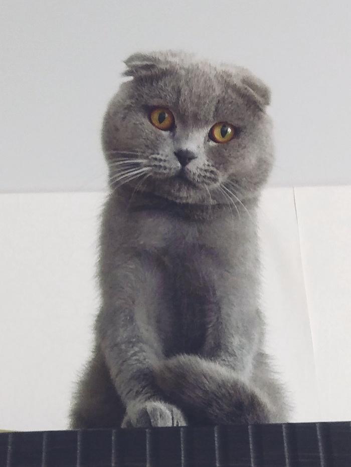 Воротник для кота после кастрации. Кот, Воротник, Ветеринария