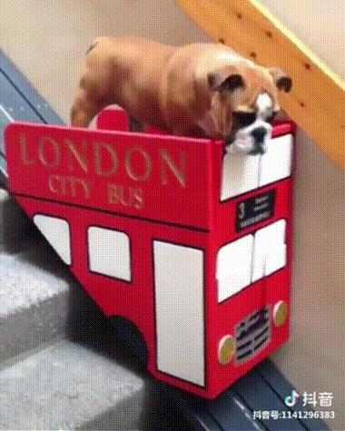 Хозяин установил на лестнице лифт для своей немолодой собаки с больными лапами Гифка, Животные, Собака, Лифт, Лестница, Reddit