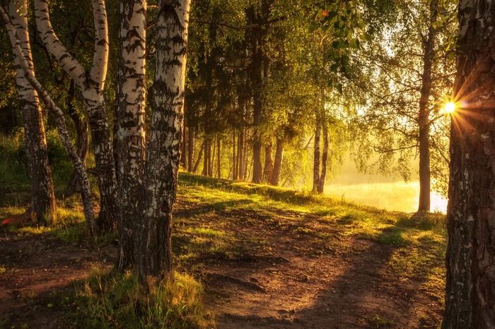 Рассвет в березовой роще, Сергиев Посад