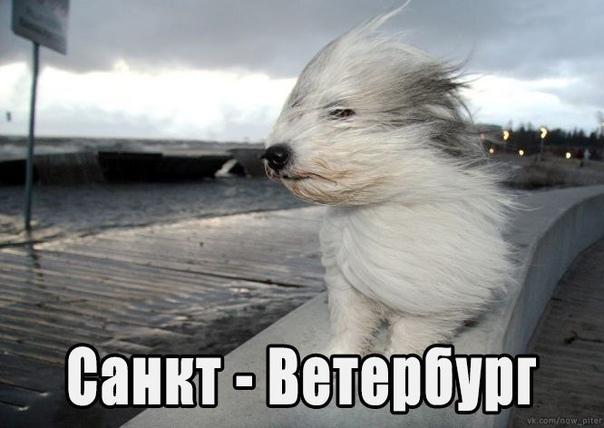 И коротко о погоде Санкт-Петербург, Now_piter, Ветер, Штормовое предупреждение