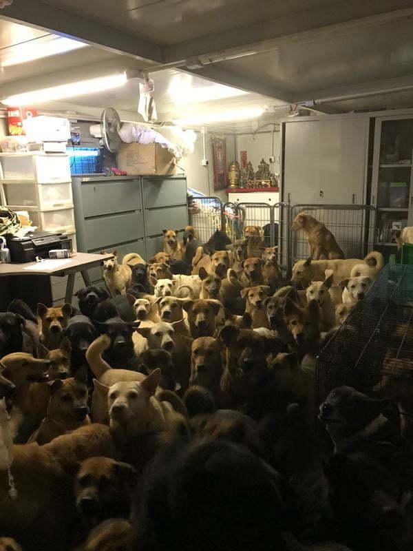 """""""Прячем собак от тайфуна в Гонконге"""""""