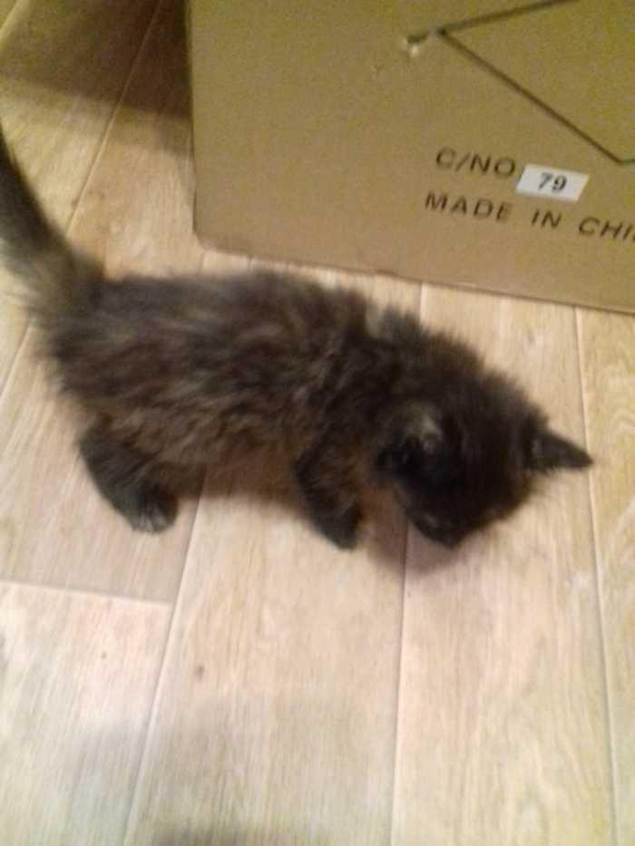 Ищу дом котенку. Кот, В добрые руки, Екатеринбург, Длиннопост, Без рейтинга